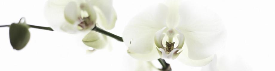... una Flor un sentimiento ...